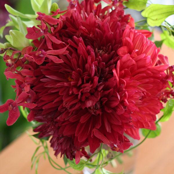 赤、朱色系のダリアのブーケ、ひらひらと舞うように入れた蘭とグリーンがポイント。